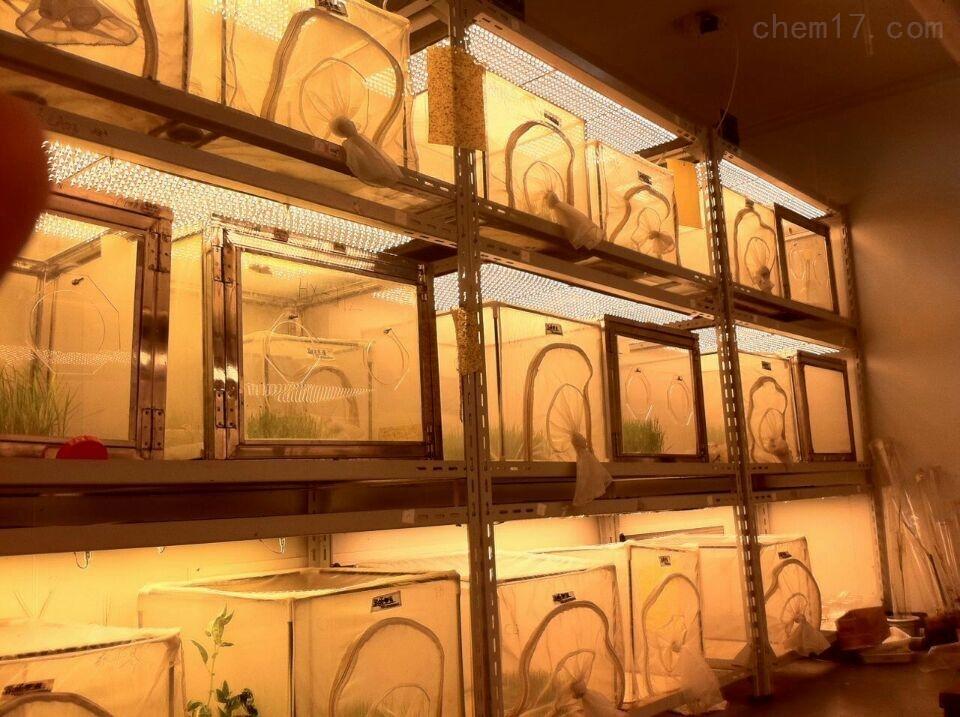 冷光源人工氣候室