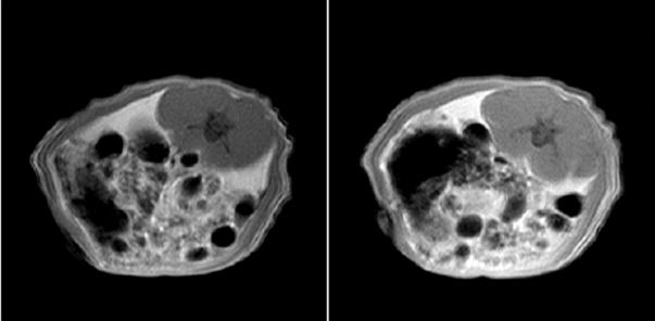 实验动物小核磁共振成像仪-上海纽迈电子科技有限