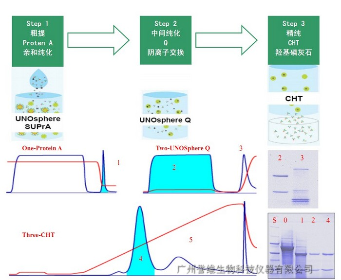 克隆抗体纯化方案
