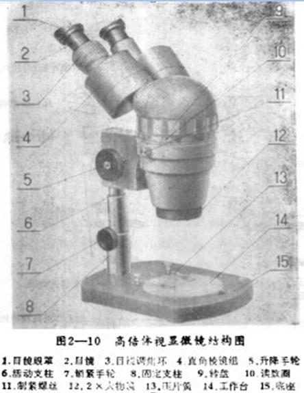 体视显微镜结构图