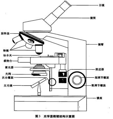 生物显微镜结构图