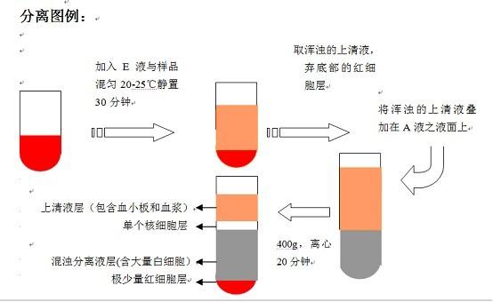 白细胞分离液试剂盒说明书