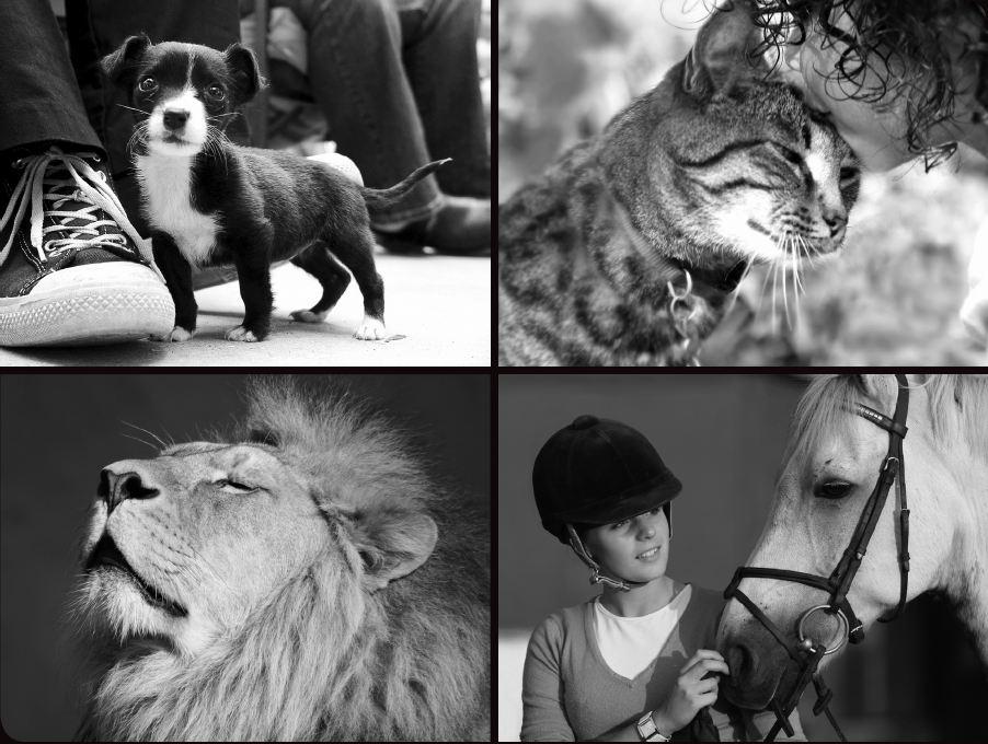 动物传递信息方式